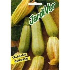 Calabacin genoves 25 grs
