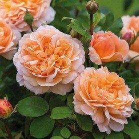 The Lady Gardener