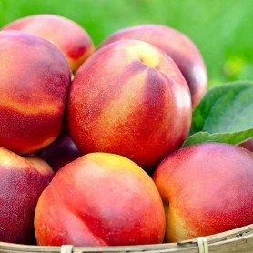 Peach me Nectarina