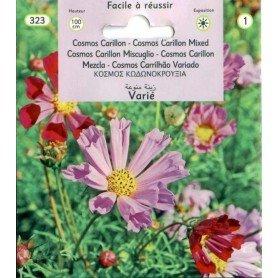 Cosmos Carillon flores S-1