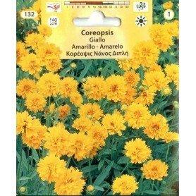 Coriopsis Giallo amarillo