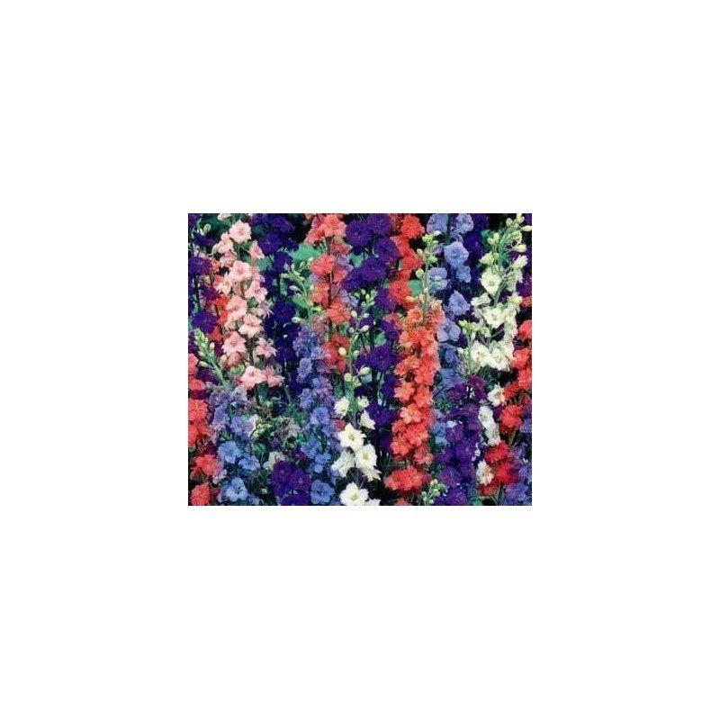 Delphinium variado