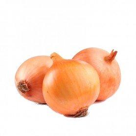 Plantero cebolla recas valenciana