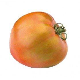 Plantero tomate hibrido bond