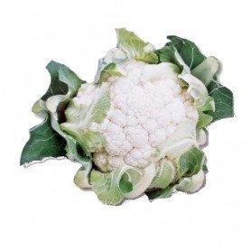 Plantero coliflor Meridien