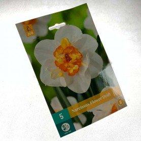 Narcisos Flower Drift 5 ud
