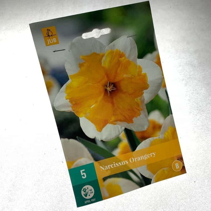 Narcisos Orangery 5 ud