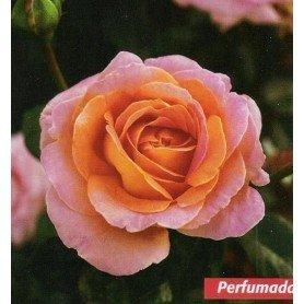 Rosa Elle