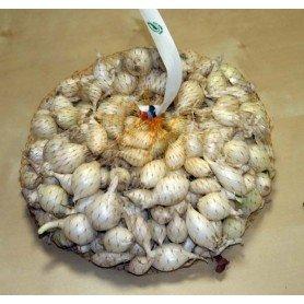 Cebolletas Blancas 250 gr