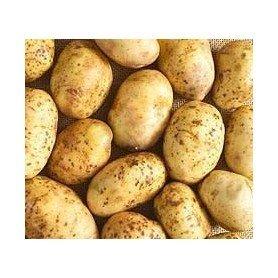 Patata de siembra pregerminada Kennebec