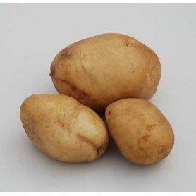 Patata de siembra pregerminada Jaerla