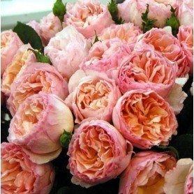 Rosa Princesa Charlene de Monaco