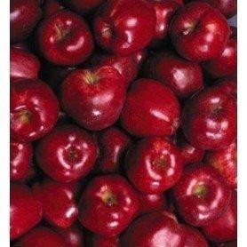 Manzano Red delicius rd