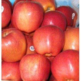 Manzano gala rd