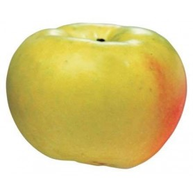 Manzano verde doncella