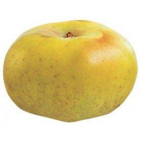 Manzano reineta blanca rd