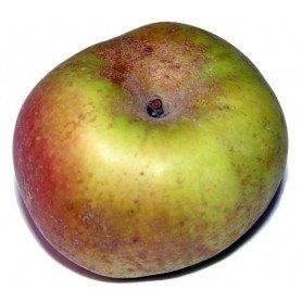 Manzano reineta de Caux