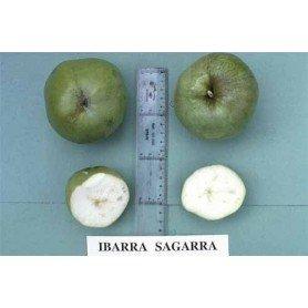 Manzano de sidra Ibarra