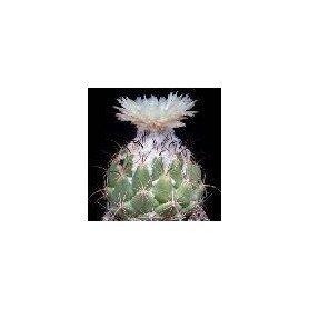 Coryphanta Palmeri