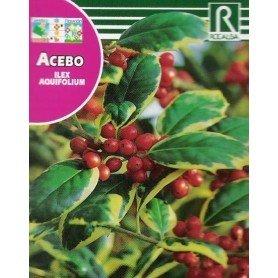 Semillas de Acebo 1 gr