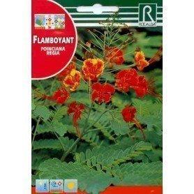 Semillas de Flamboyant 1 gr