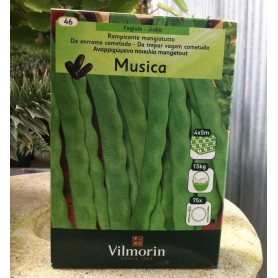 Judia Musica-mistica 350 s