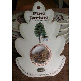 Semillas de Pino Laricio