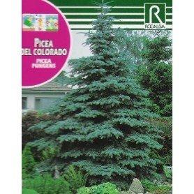 Semillas de Picea del colorado 0.5 g