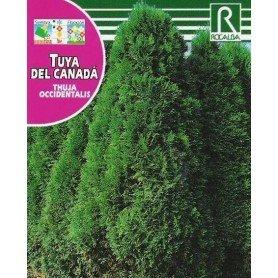 Semillas de Thuya del canada 0.5 gr