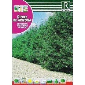 Semillas de Cipres de arizona glauca 2 gr