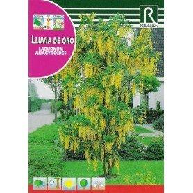 Semillas de Lluvia de oro 1 gr
