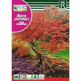 Semillas de Acer palmatum 0.50 gr