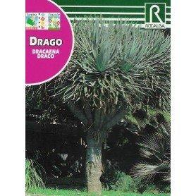 Semillas de Drago 1 gr