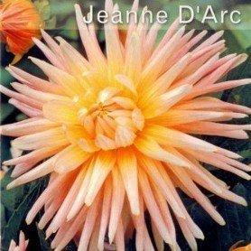 Dalia Jeanne de arc 1 ud