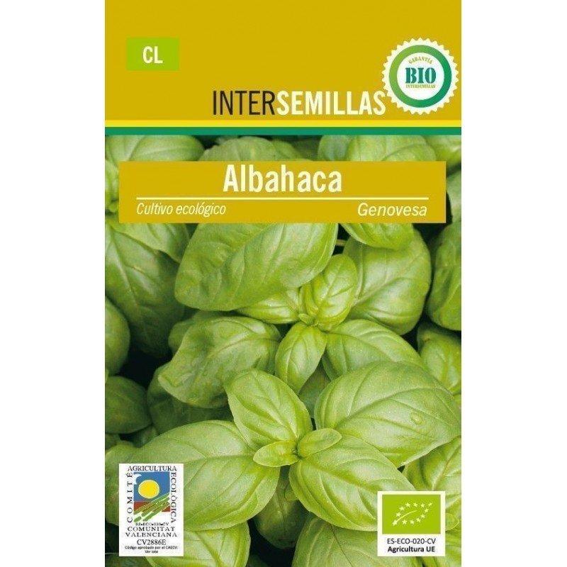Semillas ecologicas Albahaca genovesa 1g