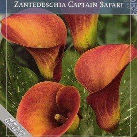 Cala Captain Safari 1 ud