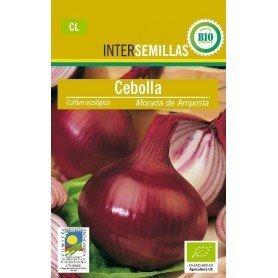 Semillas ecologicas cebolla morada amposta