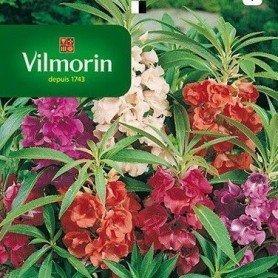 Balsamina con flor de Camelia
