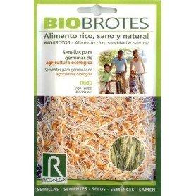 Bio brotes para germinar trigo