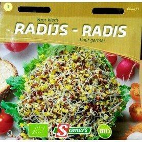 Semillas Bio brotes para germinar rabanitos 25 gr