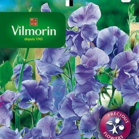 Guisante de olor Spencer azul 5gr
