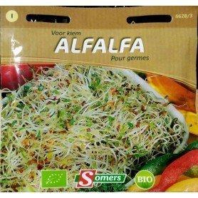 Semillas Bio brotes para germinar alfalfa 50 gr