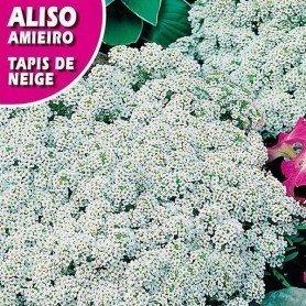 Aliso blanco 1 g