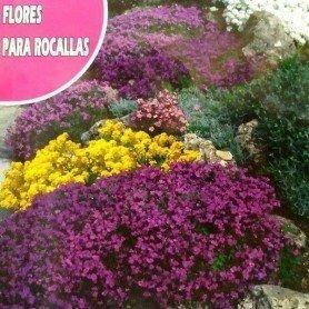 Semillas de Flores para rocallas