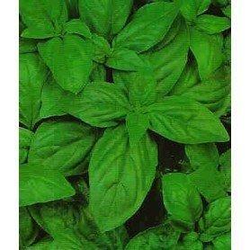 Semillas de Albahaca grande verde 4 g