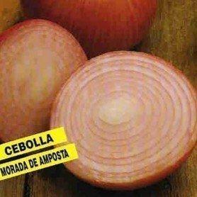 Cebolla morada de Amposta 20 g