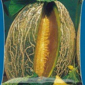Melon casca de Carvalho 5 g