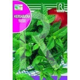Semillas de Menta spicata. Hierbabuena