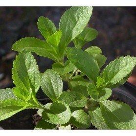 Stevia en sobre 25 s