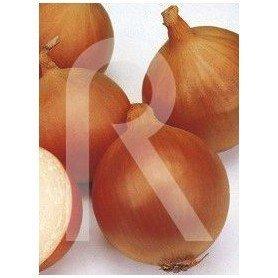 Cinta de semillas de Cebolla Valenciana Tardia Recas